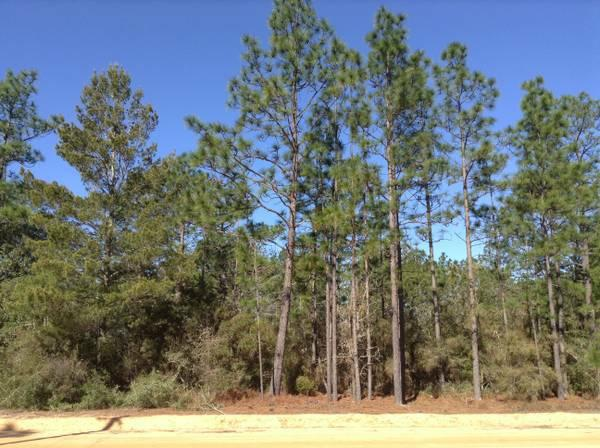 mossy head personals This home is located at lot 31 hinote road mossy head, fl 32434 us and has been listed on homescom since 5 march 2018 and is currently priced at $12,500 lot 31 hinote road is within the school district(s) walton with nearby schools including mossy head elementary school, walton middle school, and walton high school.