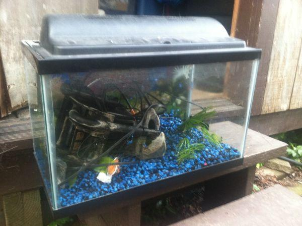 10 gal aquarium kit complete fort bragg for sale in for 30 gallon fish tank kit