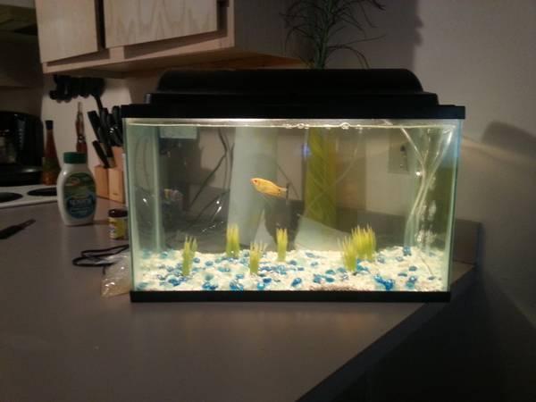 10 Ten Gallon Aquarium Tank Screen Lid Habitat Top Enclosure Small ...