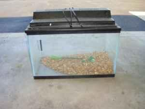 10 gallon fish tank with lid 10 gallon fish tank for Hexagon fish tank lid