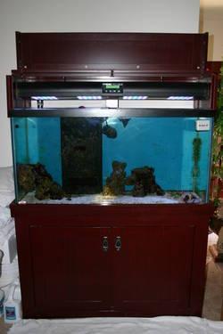 100 Gallon Salt Water Fish Tank?Complete Set Up