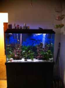 Gallon Fish Tank on 100 Gallon Fish Aquarium    550  Stockton  For Sale In Stockton