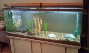 110 gallon fish tank w custom stand paradise for sale for 200 gallon fish tank for sale