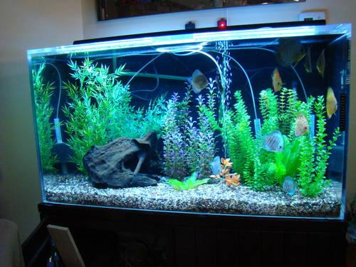 120 Gallon Acrylic Aquarium Complete With Everything But