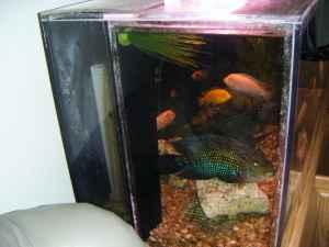 125 gallon acrylic fish tank rocky mount for sale in for 125 gallon fish tank for sale