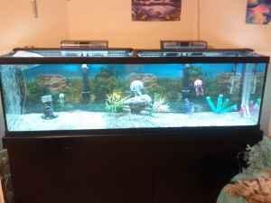125 gallon fish tank w stingray marshalltown ia for for Stingray fish tank