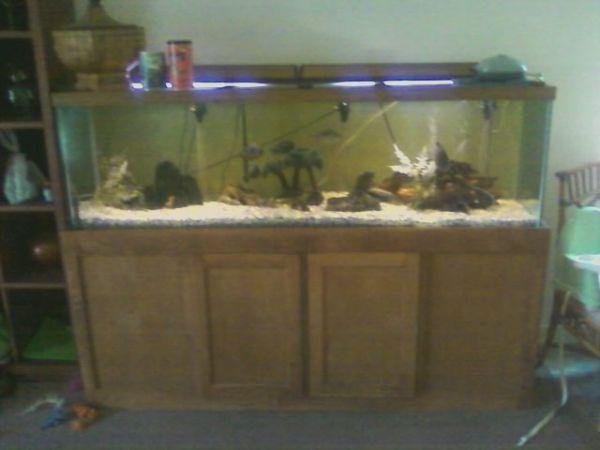 130 Gal Fishtank Complete Weverything Including Fish 300 Patterson_21939369 on Property Management Modesto Ca