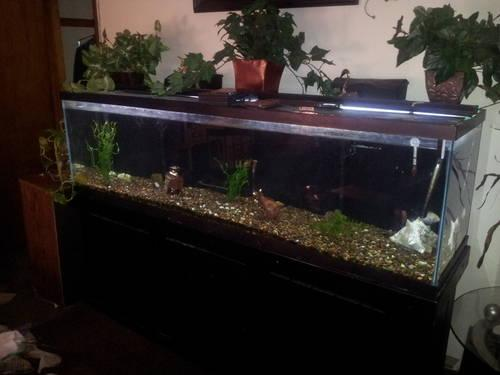 150 gallon aquarium