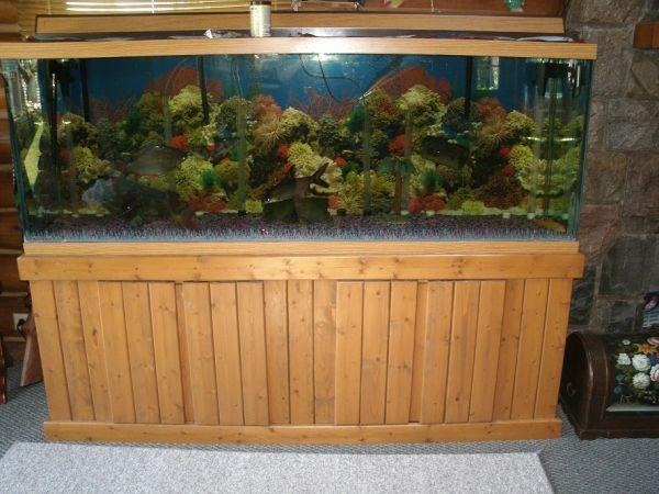 200 gallon fish tank for sale images for Cheap 20 gallon fish tank