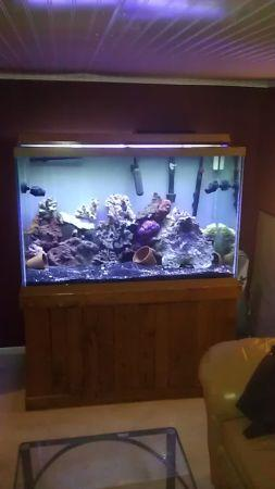 Salt water fish for Saltwater fish tank for sale