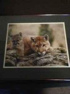 16x20 Cougar Print Professionally Framed - $50
