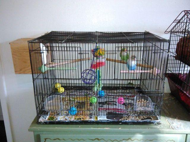 The Human Soul Is Like A Bird That Is Born In A Cage: 2 Male Lovebirds Cage Nestbox And What Food I Have Left