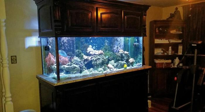 200 Gallon Reef Aquarium for Sale in Muskogee, Oklahoma Classified | AmericanListed.com