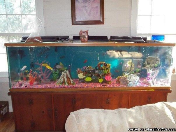 200 gl fish tank stand and 25 fish for sale in canyon lake for 200 gallon fish tank for sale
