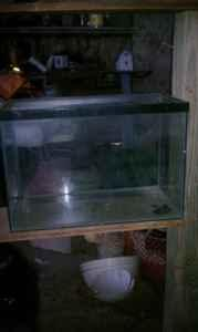 Gallon Fish Tank on 20 Gallon Fish Tank    20  Milton  For Sale In Pensacola  Florida