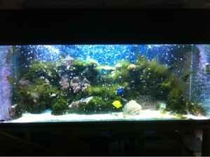 220 gallon reef tank setup with 75 gallon sump refugium for 220 gallon fish tank
