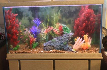$250 OBO 58 Gallon Fish Tank