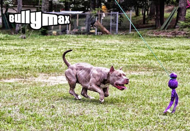 Bully Max Muscle Building Supplements For Pit Bulls