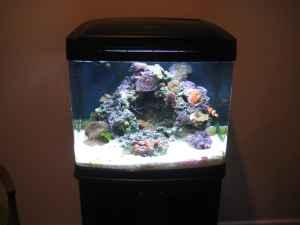 29 gallon bio cube fish tank west irondequoit ny for for Bio cube fish tank