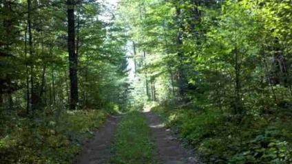 $304,000 160 Acres with stream & Cabin