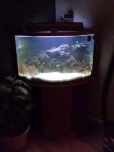 Saltwater fish for 35 gallon tank aquarium effects for Bow fish tank