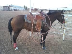 roping lessons for sale in Odessa, Texas Classifieds & Buy and Sell