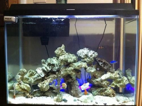 40 Gallon Saltwater Fish Tank For Sale In Little Rock