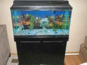 fish tank games 100 gallon - for sale a 180 gallon fish tank stand and ...