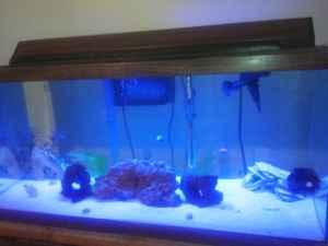 Gallon Fish Tank on 40 Gallon Saltwater And 30 Gallon Freshwater Fish Tank Aquarium Fish