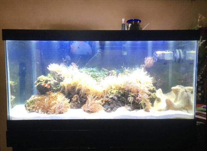 45 gallon tank for sale
