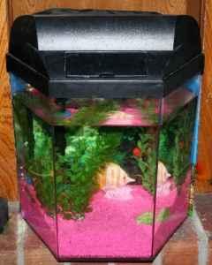 5 Gal Octagon Aquarium Catoosa For Sale In Tulsa