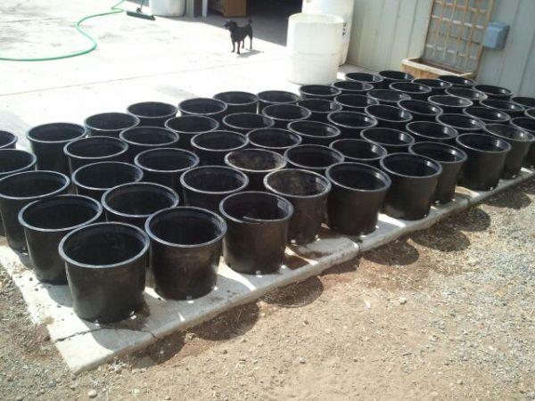 5 gallon buckets - $1