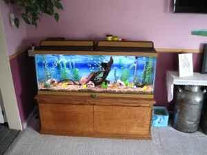 50 Gallon Fish Tank And Oak Stand Torrington Wy For