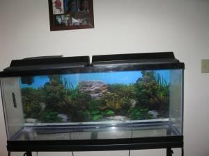 55 Gal Fish Tank Setup Se Lawrence For Sale In