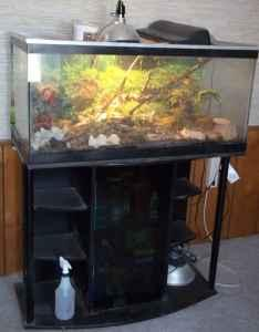 55 gal reptile fish tank pueblo west for sale in for 55 gallon fish tank for sale