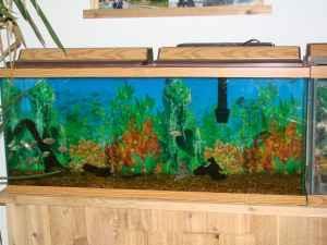 55 gallon fish tank bernard for sale in dubuque iowa for 200 gallon fish tank for sale