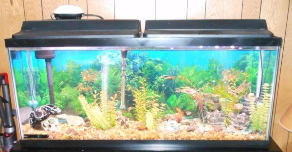55 gallon fish tank needs fish tank 55 gallon aquarium for 55 gal fish tank stand