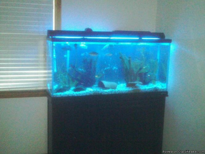55 Gallon Fish Tank for Sale in Ames, Iowa Classified AmericanListed ...
