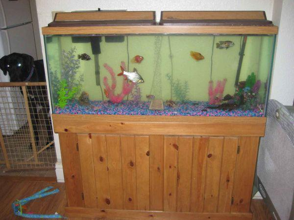 55 gallon fish tank combo pine color philadelphia for for 55 gallon fish tank for sale