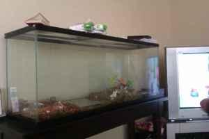 Fish tank 55 gallon for sale 55 gallon fish tank for for 55 gallon fish tank for sale