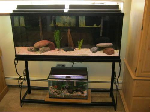 55 Gallon Fish Tank Setup For Sale