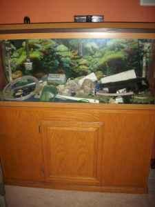 55 gallon fish tank w oak stand accessories dubuque for 55 gallon fish tank for sale