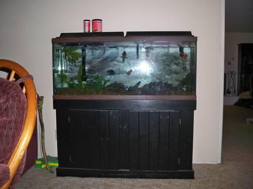 55-gallon Fish Tank with all accessories