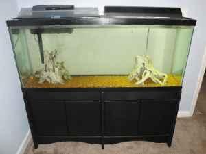 55 gallon fish tank with stand southern pines for sale for 55 gallon fish tank for sale