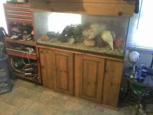 55 gallon fish tank with stand all it needs is water and for 55 gallon fish tank stand for sale