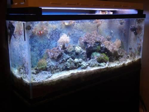 55 Gallon Saltwater Aquarium