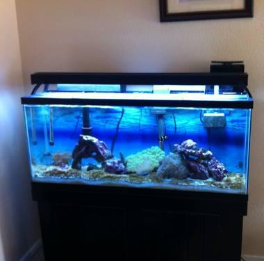 55 gallon saltwater tank for sale in festus missouri for Saltwater fish tank for sale