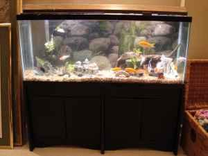 Gallon Fish Tank on 55 Gallon Fish Tank Aquarium Stand Filters Fish And Ton More     185