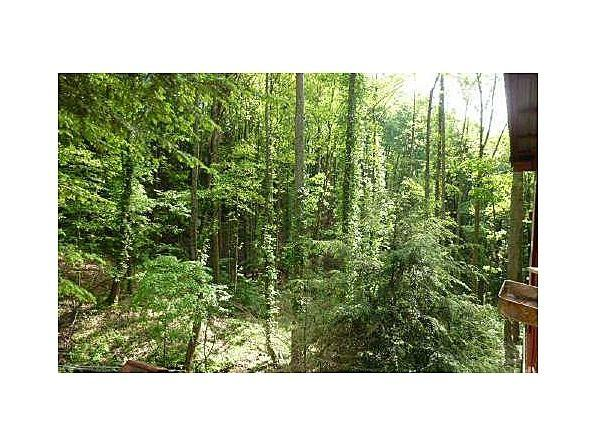 $60000 ellijay ga (big buck mountain)