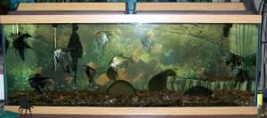 Gallon Fish Tank on 65 Gallon Fish Tank Aquarium 100 Paulden 29621073 Jpg